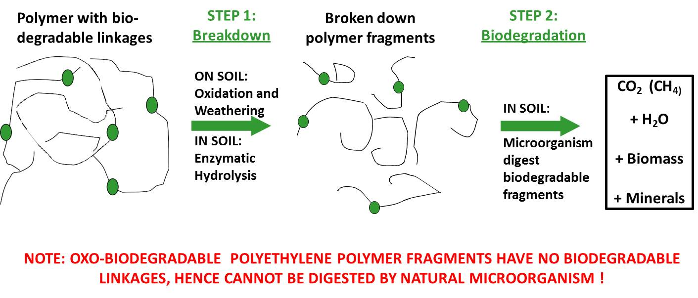 steps biodegradation