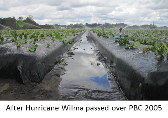 after hurricane wilma